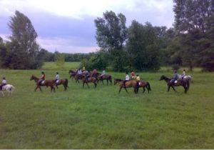 Csapatépítés lovakkal